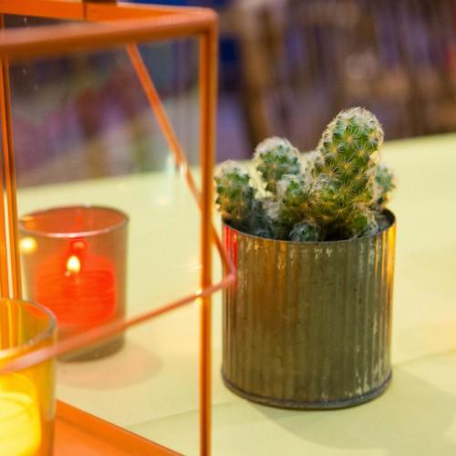JJ mini cactus