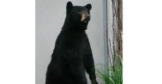 Bear 230 x 120