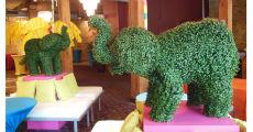 Elephant Topiaries 230 x 120