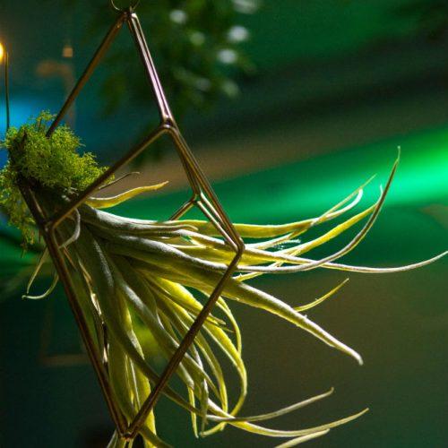 BATC hanging succulent 1000