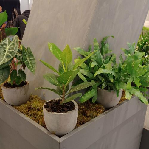 Aveda Congress Plants